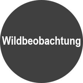 Wildbeobachtung